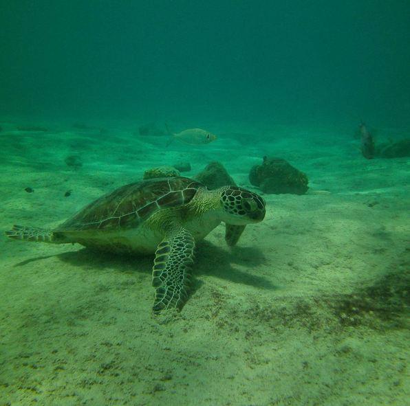 Bonaire2-11