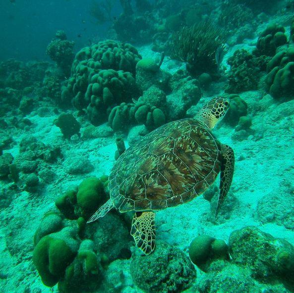 Bonaire2-14